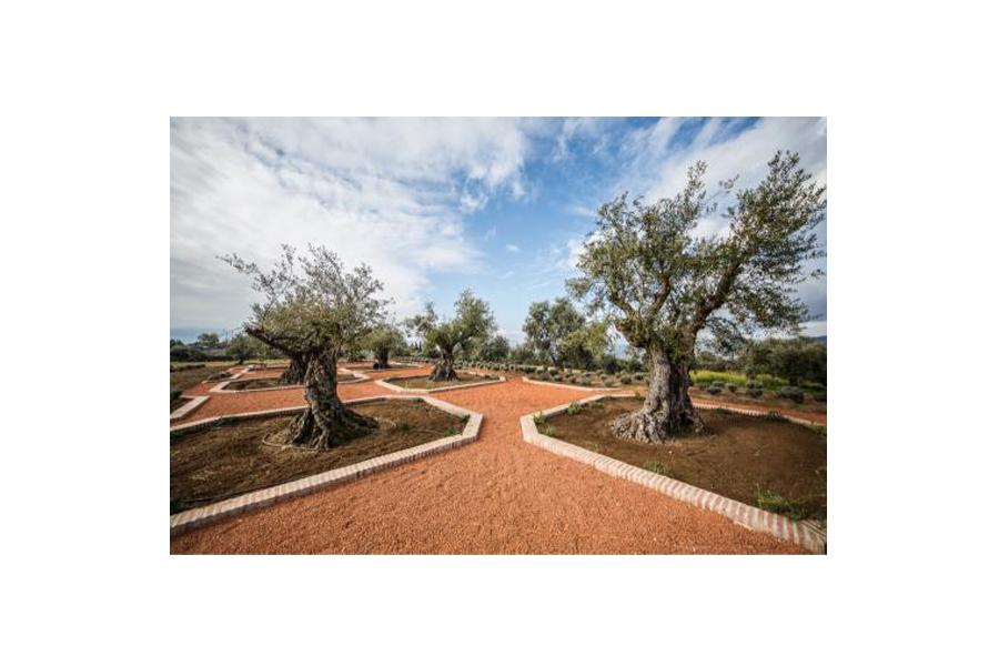 190117_LA_Organic_Experience_plaza_de_la_Carlota_0Z6A1125